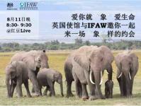 """英国使馆与IFAW邀你来一场""""象""""样的约会-红豆Live直播"""