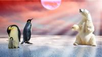【邀请函】极地探险的故事里,怎能没有你?-红豆Live直播