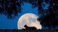 摘个月亮给你-KilaKila直播