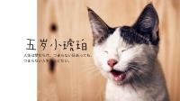 ✧٩(ˊωˋ*)و✧属于你的幼猫系女友-KilaKila直播