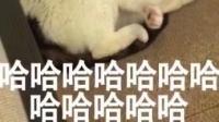 可爱哒糯米糍的直播间-KilaKila直播