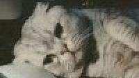 🐱只是一只猫-KilaKila直播