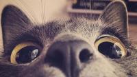 我正在看着你(翻唱下)-KilaKila直播