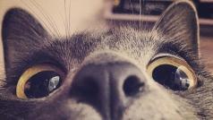 我正在看着你(翻唱下)